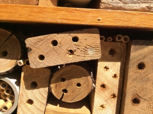 Solitary bee nesting in wood block in bee house.