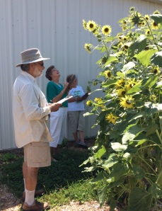 UNL Extension Master Gardener volunteers in Lancaster County  participating in pollinator count.