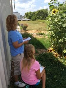 Pollinator count on sunflowers at habitat.