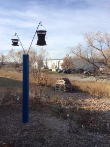 Sunflower seed feeders added to habitat.