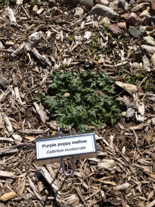 New plant label in pollinator habitat.