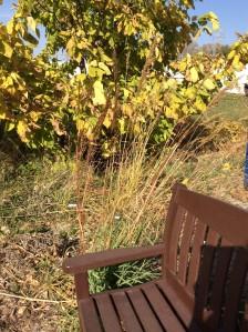 Native grasses, like Indiangrass, established in the pollinator habitat.