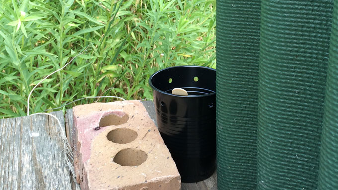 Aedes Mosquito Trap