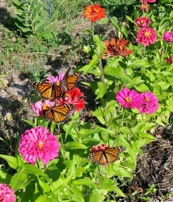 monarchs92216
