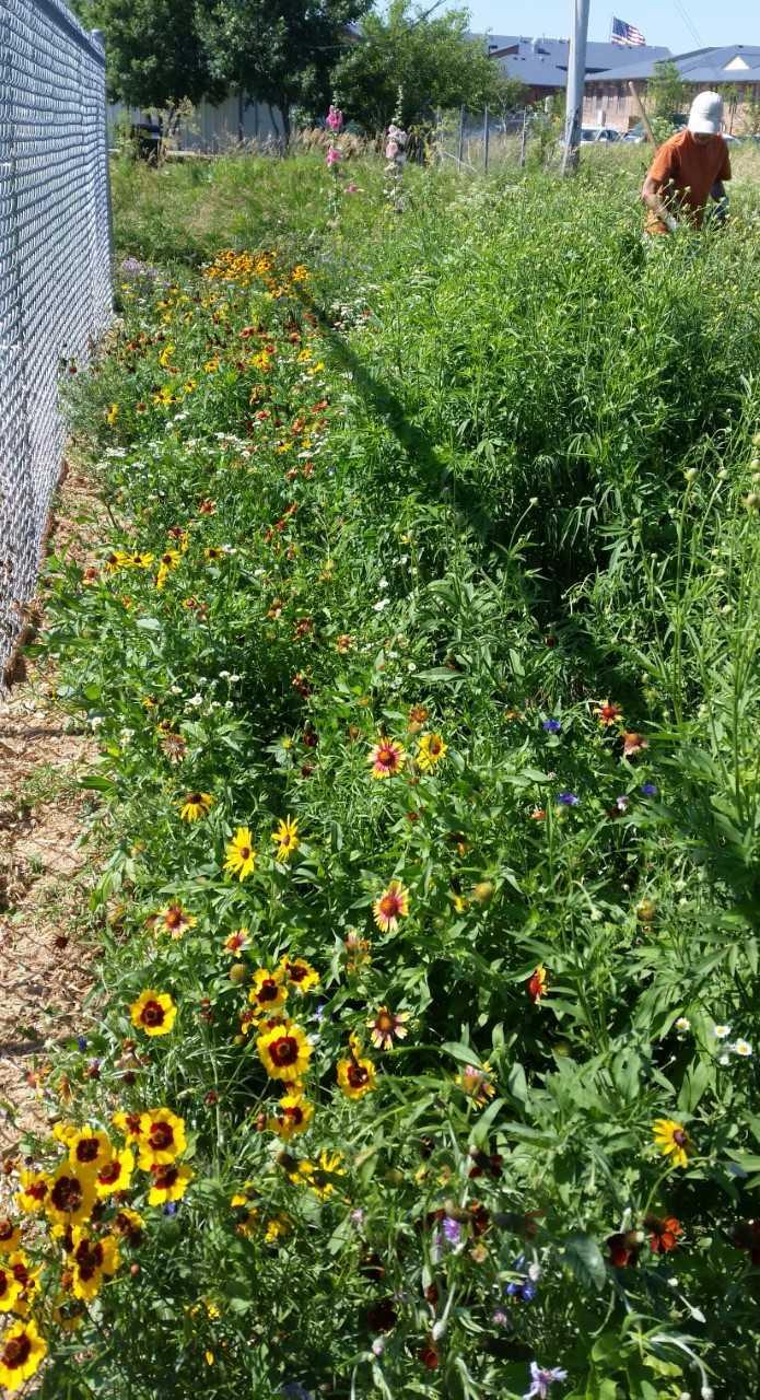 Mission Pollinator Garden with Jane