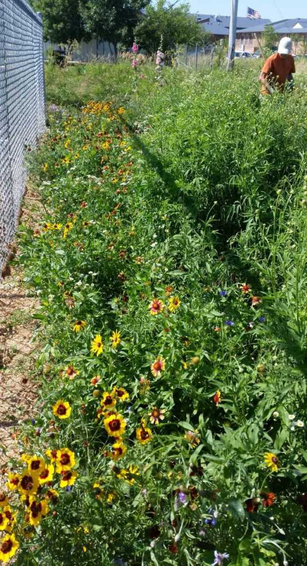 Mission Pollinator Garden with Jane