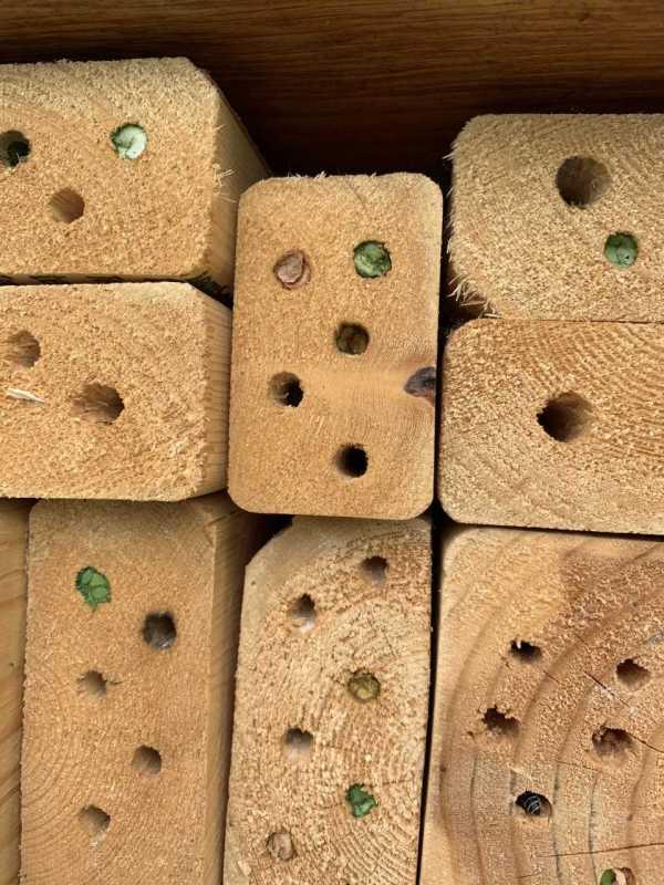 leafcutterbeeblocks