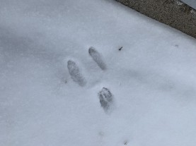 rabbittracks